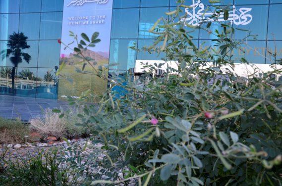 Dhafra plants thriving